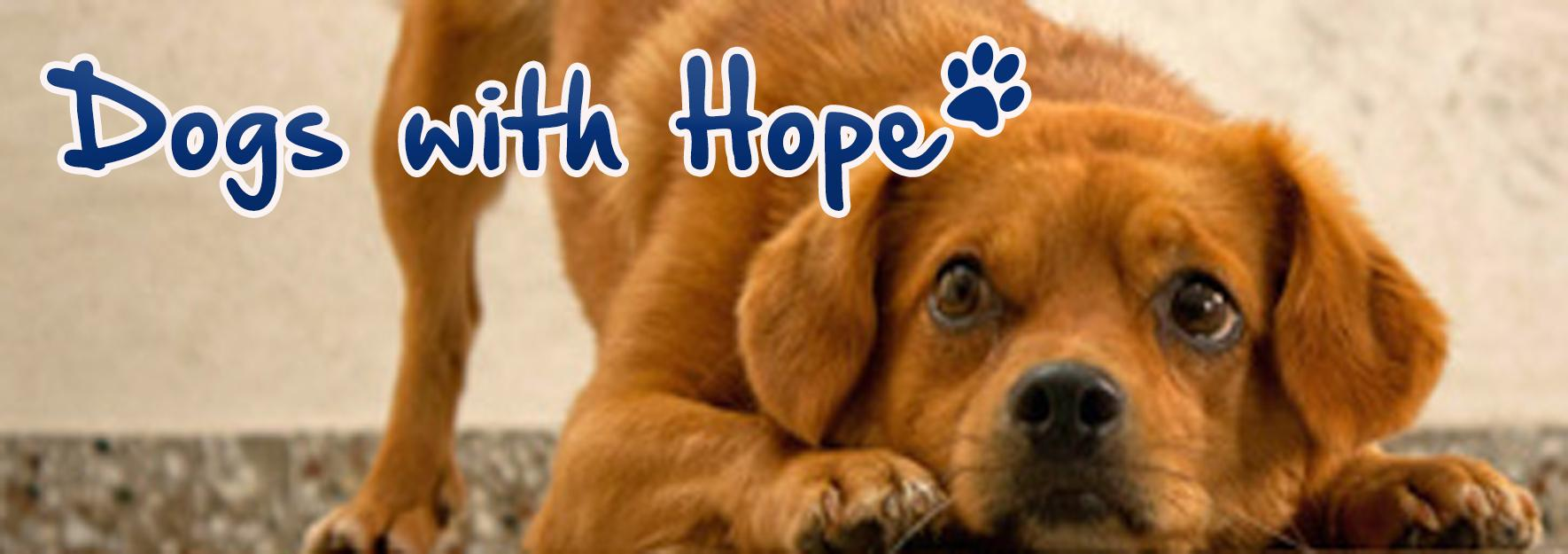 STICHTING DOGS WITH HOPE