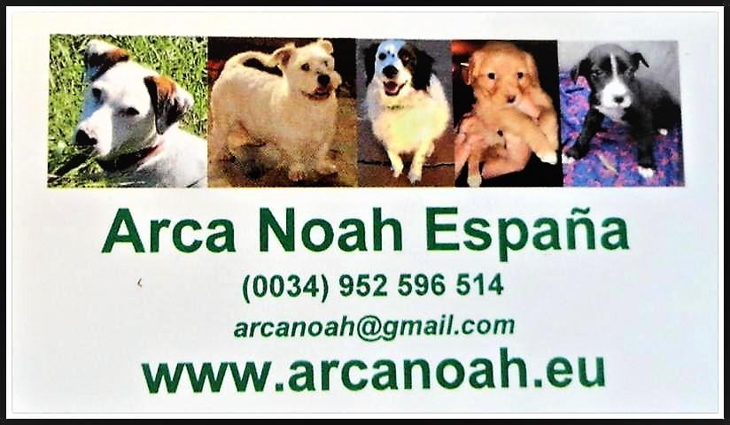 ARCA NOAH ESPANA