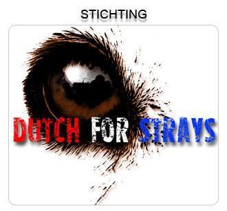 STICHTING DUTCH FOR STRAYS