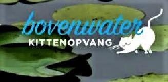 KITTENOPVANG BOVENWATER